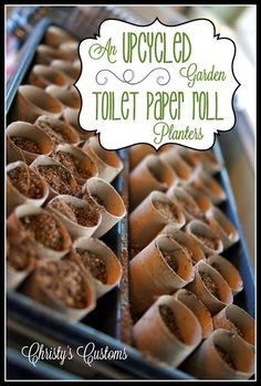 Christy's Customs and the Little House by the Olive Tree: An Upcycled Garden: Toilet Paper Roll Planters When To Plant Seeds, Toilet Paper Roll Crafts, Outdoor Classroom, Classroom Ideas, Plant Growth, Olive Tree, Seed Starting, Planting Seeds, Gardening Tips
