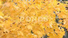 Autumn wind - Стоковое видео | by xander_d
