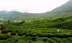 Shrayansh Faria Photography posted a photo:  Day 06 (16.11.2012)  Kolukkumalai , Kerala, India  Located high on the slopes of Meeshapulimala, Kolukkumalai is arguably the estate with the highest grown tea in the world! Started in the early 1900s the estate produces tea using the orthodox methood in the time tested tea factory. Little has changed here since the colonial planters left leaving behind their legacy of one of the best quality tea you can get in South India.  Though known for it's…