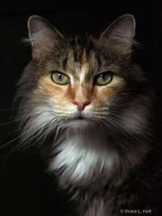 Beauty cat