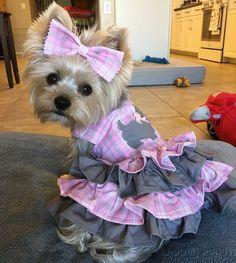 Dog Dress Dog Dresses Dog Clothing Plaid Dog by PippaAndPenelope