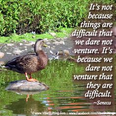 Do we avoid doing things because they're difficult, or are things difficult because we avoid doing them? http://www.facebook.com/VibeShifting #quotes