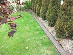 landscape timber edging - Google Search