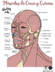Pin by Carla Leon Colon on Study Medicine Notes, Medicine Student, Medicine Book, Studying Medicine, Medical Photos, Medical Anatomy, Human Anatomy And Physiology, Med Student, Medical Science