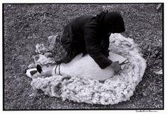"""Constantine """"Costa"""" Manos (1934 South Carolina): Greece. Crete. 1964. Shearing a sheep.. """"A Greek Portfolio"""" p.98. © Costa Manos/Magnum Photos"""