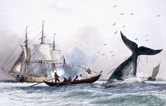 Whale fishing