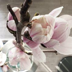 Wat een rare dag vandaag.. regen, hagel, zonneschijn.. maar vooral veel wind! De schutting is deels omgewaaid  Gelukkig waren we al van plan de achtertuin aan te gaan pakken volgende maand! Ik ga slapen, eens kijken of het aankomende nacht wel lukt  Good night!  #magnolia #magnoliatak #pink #roze #flowers #bloemen #styling #homestyling #interior #interieur #closeup #myhome #myhome2inspire