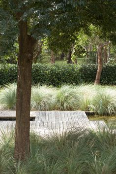 Country Beauty ‹ Peter Fudge grasses and trees – At last an Aussie garden. Country Beauty ‹ Peter Fudge grasses and trees – At last an Aussie garden. Landscape Architecture, Landscape Design, Garden Design, Beach Gardens, Outdoor Gardens, Deck Around Trees, Hampton Garden, Australian Native Garden, Garden Features