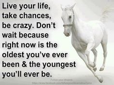 Life quote with horse theme