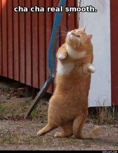 Cats, cat, cha cha, dancing, marmalade