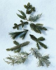 pine branches made into a tree.