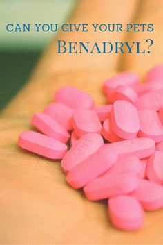 Did you know Benadryl is used to treat the loss of appetite in dogs and cats? Find out what are the other possible uses for this drug.