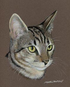 Custom Portrait of a Feline by Heather A. Mitchell Pencil ~ 10 x 8