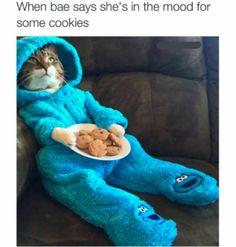 Cookie Monster Kitty Meme