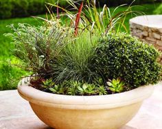 There's more than one way to plant up a pot. Be inspired by these wonderful potted designs.  http://www.home-dzine.co.za/garden/garden-potty-ideas.htm