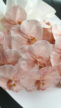 The most stunning dusty pink moth orchids. Surely I am not the only one obsessed… - Orchidee und kaktus