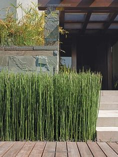 Love the structure of this grass