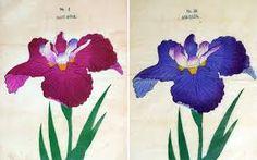 japanese flower prints - Google Search