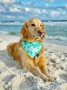 Cute Dog Bandana, Plaid Dog Bandana, Dog Bandana, Handmade Dog Bandana, St. Patrick's Day Dog Bandana, Dog Mom, Cute Dog Accessories, St. Patrick's Day 2021, Tails Up Pup, Tailsuppup, Cute Dog, Golden Retriever, Dog Photo Ideas, Dog Beach, Dog On Beach,