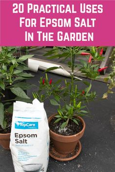 Gardening Hacks, Organic Gardening, Epsom Salt Uses, Photosynthesis, Container Plants, Pest Control, Houseplants, Arsenal, Shrubs