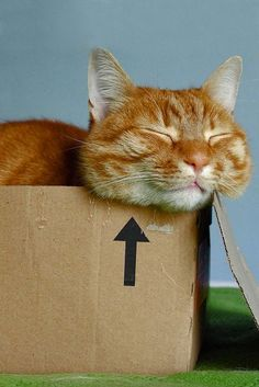 A cat snoozing in one of the favored napping spots for a feline -- the basic cardboard box.
