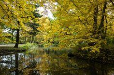 Herbstgewässer