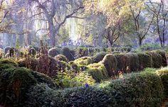 Patricia Jouanneaud - Google+ un jardin de Düsseldorf ! féérique !