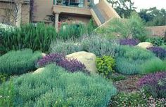 Drought Tolerant Plants Collection | Sun Loving Plants and Flowers | Bloom IQ For under olive tree?  maybe with green santolina too and thyme?