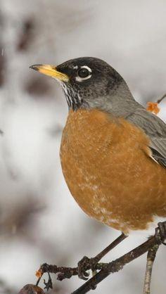 Bird, Animal, Winter, Wallpaper