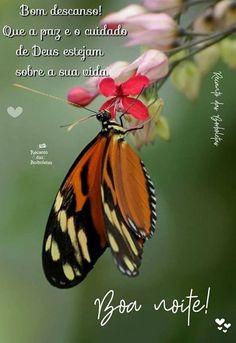 Float Like A Butterfly, Butterfly Life Cycle, Butterfly Art, Types Of Butterflies, Beautiful Butterflies, Butterfly Species, Sting Like A Bee, Pet Birds, Habitats