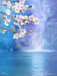 Plum blossom on the blurred waterfall background. Springtime tree branch with white flowers.