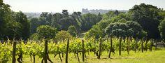 Domaine de Saint Just - Yves Lambert : Vins de Loire, Saumur Champigny, Saumur Blanc, Coteaux de Saumur, Crémant...