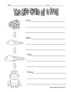 Frog life cycle writing prompt by adrienne mosiondz Kindergarten Science, Elementary Science, Science Classroom, Teaching Science, Teaching Ideas, Writing Activities, Sequencing Activities, Science Writing, Easy Writing
