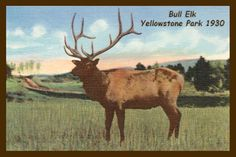 Bull Elk in Yellowstone Park 1930. Quilt Block printed on cotton for quilters. Ready to Sew.  Single 4x6 quilt block $4.95. Set of 4 quilt blocks with pattern $17.95.