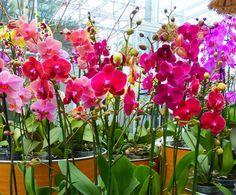 Egy pici falu, egy elvarázsolt erdő és 2 millió orchidea! - Egy az Egyben Dubrovnik, Slovenia, Orchids, Projects To Try, Flowers, Gardening, Park, Travel, Plant
