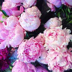 Beauty in Bloom