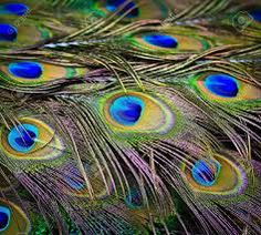 pavo real wallpapers - Buscar con Google