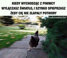 nie ma tu co opisywac #losowo #Losowo #amreading #books #wattpad
