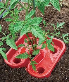 Tomato Automators, Gardening Supplies and Garden Tools at Burpee.com