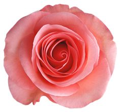 "Photo from album ""РОЗЫ"" on Yandex. Image Transparent, Flower Wallpaper, Red Roses, Decoupage, Clip Art, Flowers, Yandex Disk, Album, Royal Icing Flowers"