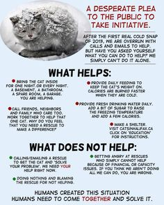 What to do for domestic and feral cats during this cold season. via https://www.facebook.com/photo.php?fbid=729945903702679set=a.390613204302619.93103.389786611051945type=1theater