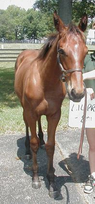 American Pharoah Foal1