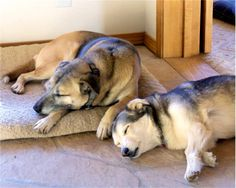 Our dogs Aspen and Timmy. Donna and Dave, Flagstaff, AZ - 8/6/2015
