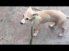 Kutya Duma - YouTube