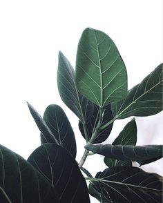 部屋には観葉植物を置きたい、緑は癒やし効果があるとか