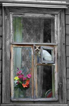 Mi propia ventana. El colmo del lujo felino.