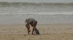 Un pingüino viaja 8 mil Kms cada año para visitar al hombre que salvó su vida