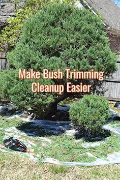 Bush Trimming Cleanup is Easier with Disposable Drop Cloths Reviewed Garden Projects, Garden Tools, I Had An Epiphany, Pictures Of Beautiful Places, Drop Cloths, Together We Can, Clean Up