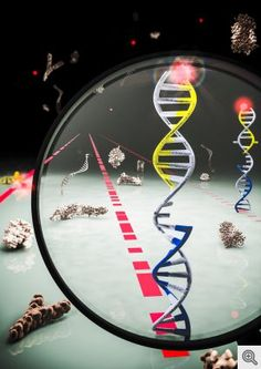 Braking Mechanism Identified for Cell Growth Pathway Linked to Several Cancers - http://scienceblog.com/79037/braking-mechanism-identified-cell-growth-pathway-linked-cancers/