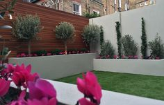 raised render block beds artificial grass lawn olive trees buxus topiary small…